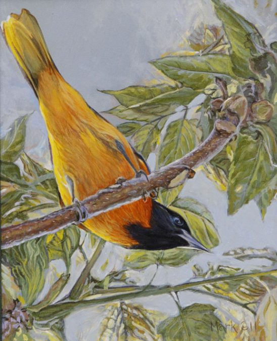 Oriole by Laura Mark-Finberg
