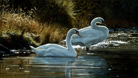 Perfect Harmony by Terry Isaac