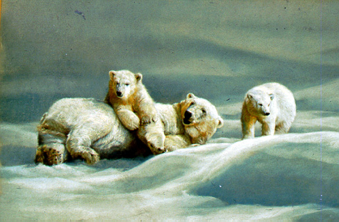 Polar Bear With Cubs by Dino Paravano