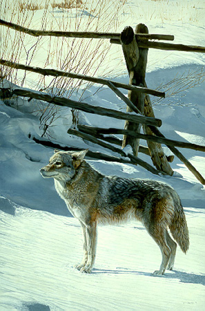 Railfence – Coyote by Terry Isaac