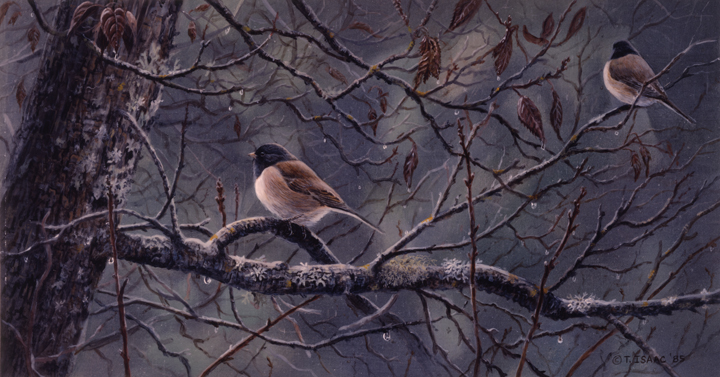 Rainy Day – Juncos by Terry Isaac