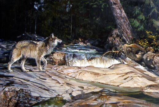 River Crossing – Gray Wolf by Dino Paravano