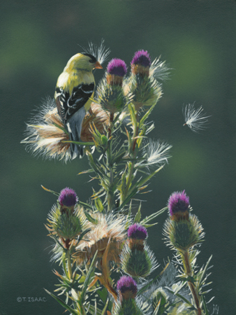 Sewing Seeds-Goldfinch by Terry Isaac