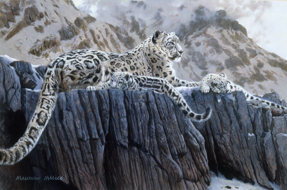 Snow Leopard Family 2 – by Matthew Hillier