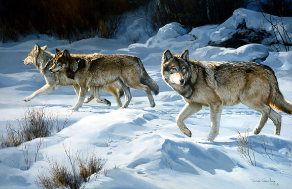 Snow Prowl – Grey Wolves by Dino Paravano