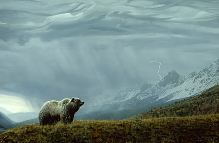 Stormwatch – Grizzly by Terry Isaac