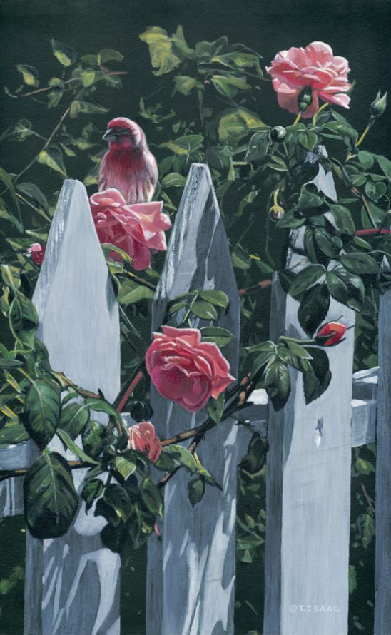 Summer Roses by Terry Isaac