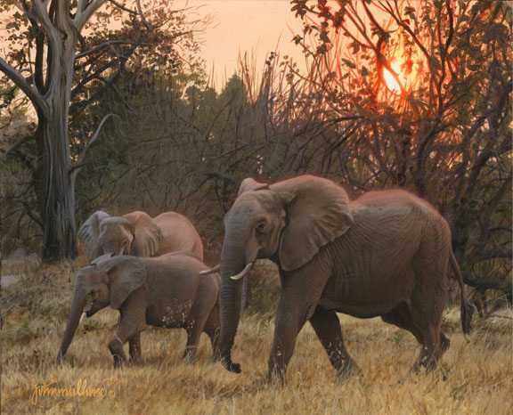 Sundown Elephant's by John Mullane