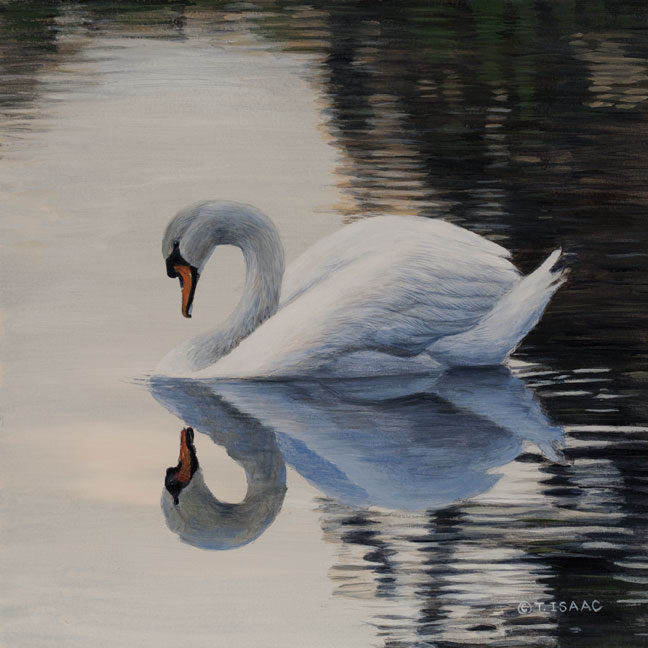 Swan Mirrored by Terry Isaac
