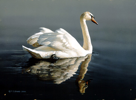 Swan by Terry Isaac
