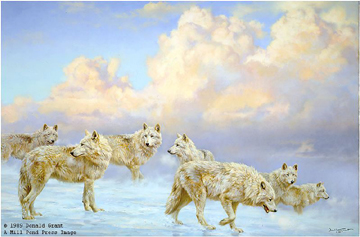 The Ice Pack – Arctic Wolves by Donald Grant