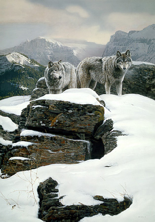The Summit – Wolves by Terry Isaac