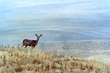 Through The Haze – Mule Deer by Terry Isaac