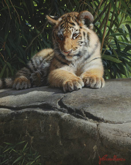 Tiger Cub#2 by John Mullane