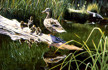 To The Next Generation – Mallards by Terry Isaac