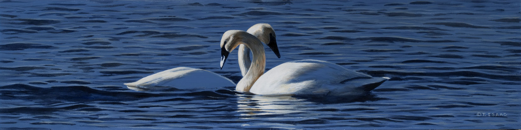 Vaseaux Lake Swans by Terry Isaac