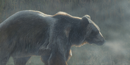 Veiled In Mist-Grizzly by Terry Isaac