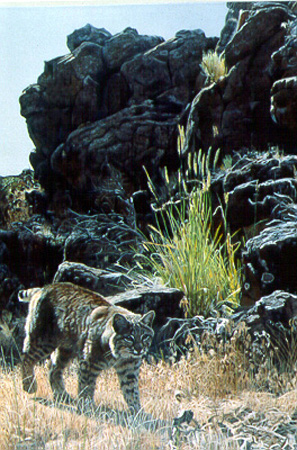Walking The Wash – Bobcat by Terry Isaac