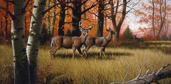 Whitetail Deer by Rod Lawrence