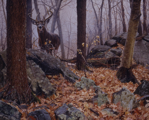 Whitetail in the Woods by John Mullane