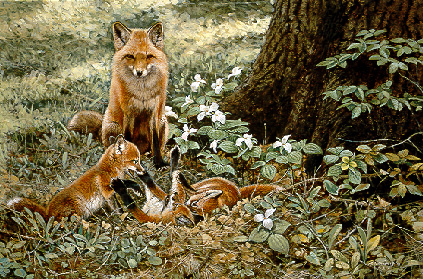 Wildlife – Afternoon Playtime – Fox Family by Alan Sakhavarz
