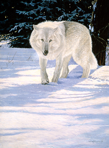 Wildlife – Snow White – Timber Wolf by Alan Sakhavarz