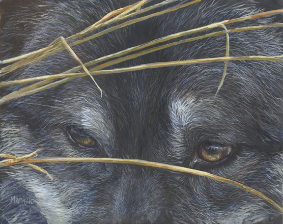 Wolf Eyes and Reeds by Laura Mark-Finberg