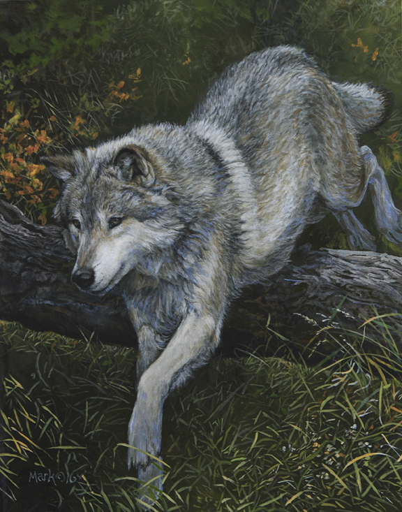 Wolf Leaping by Laura Mark-Finberg