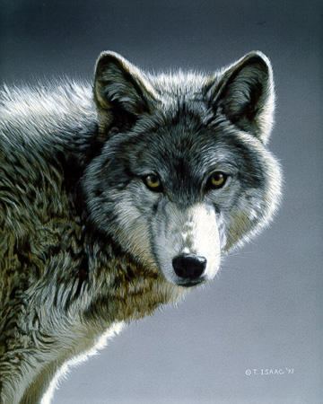 Wolf Portrait by Terry Isaac
