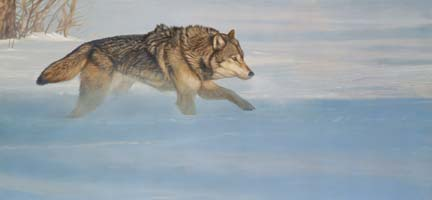 Wolf Running in Snow by Terry Isaac