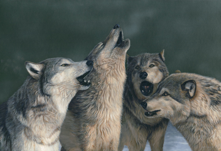 Wolf Song by Terry Isaac