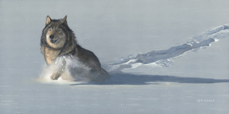 Wolf in Snow by Terry Isaac