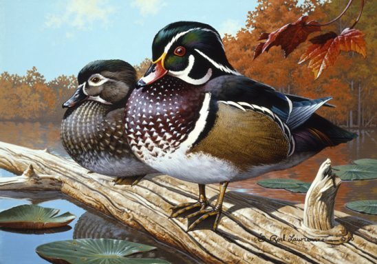Wood Ducks by Rod Lawrence