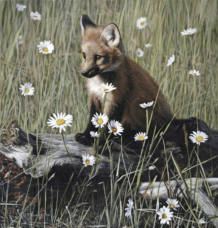 Young Fox and Wild Daisies