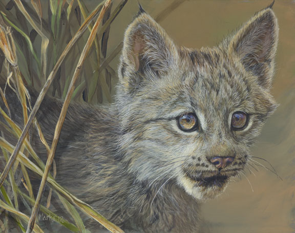 Young Lynx by Laura Mark-Finberg