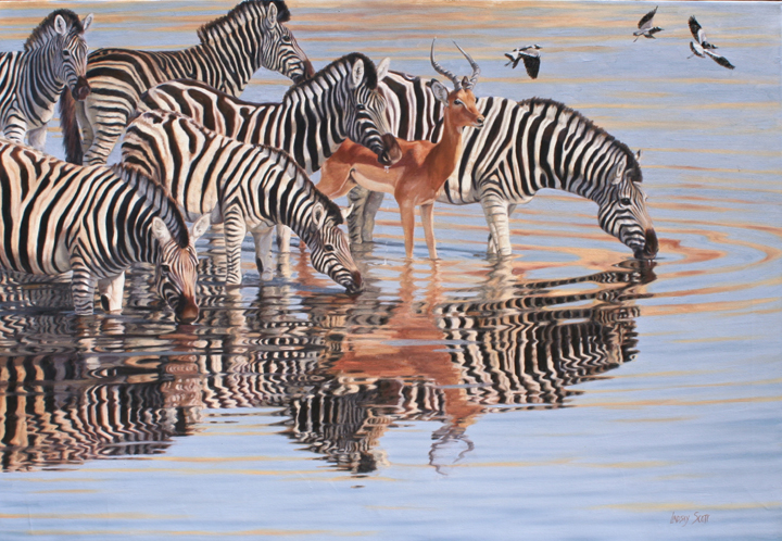 Zebras drinking with antelope