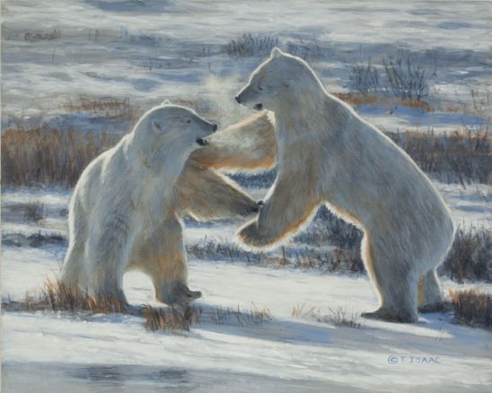 Pleased to Meet You – Polar Bears by Terry Isaac