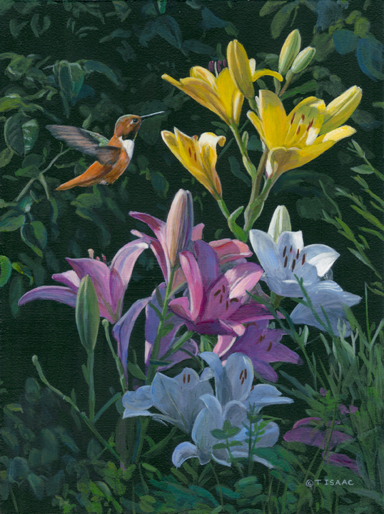 Rufous with Lilies by Terry Isaac