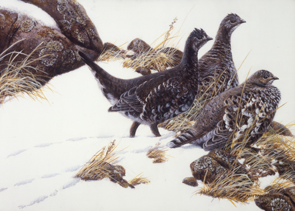 Blue Grouse by Amy Brackenbury