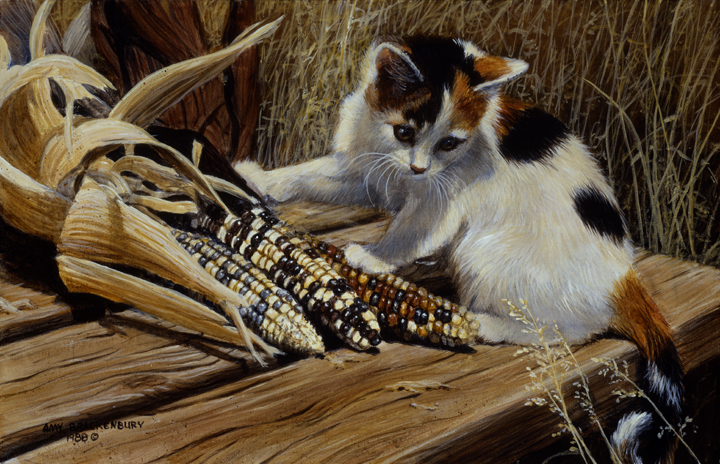 Cat in the Maize by Amy Brackenbury