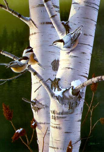 Chickadees in Tree by Daniel Smith