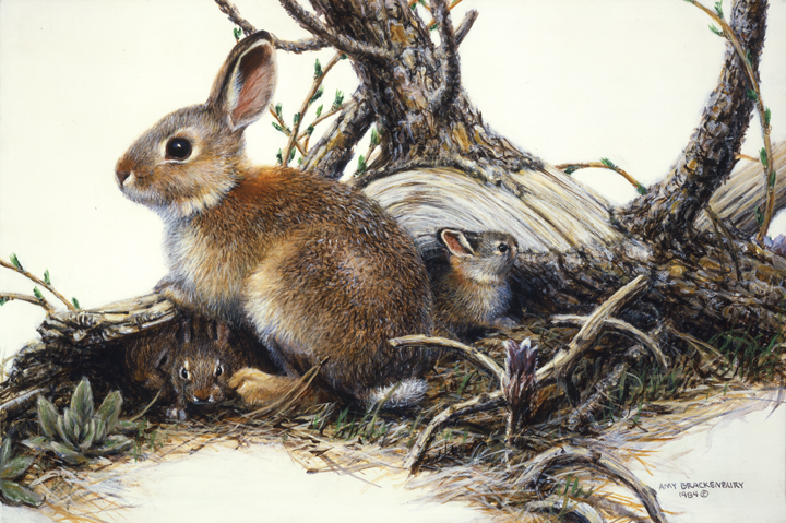 Cottontail Family 2 by Amy Brackenbury