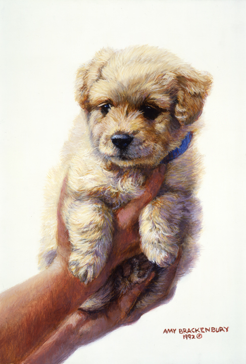 Golden Retriever Pup by Amy Brackenbury
