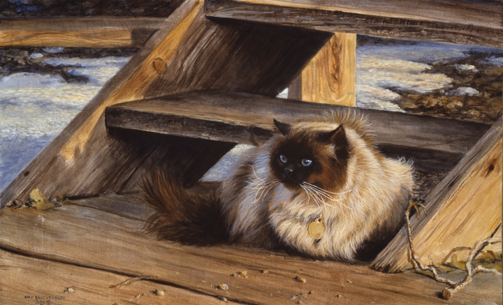 Himalayan Cat by Amy Brackenbury