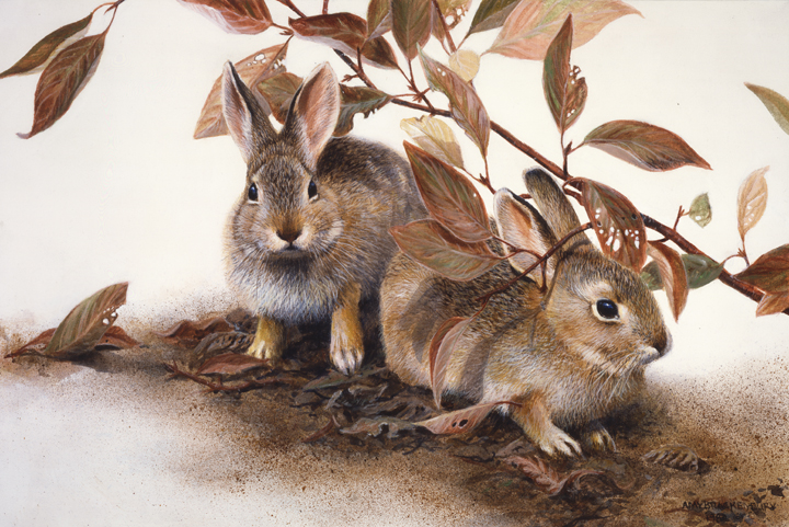 Under the Red Twigs – Cottontails by Amy Brackenbury