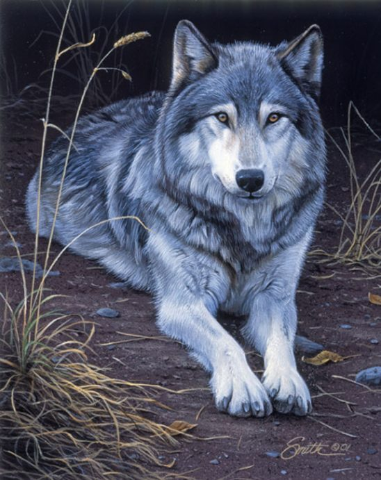 Wolf Portrait by Daniel Smith