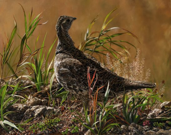 Female Blue Grouse by Karla Mann