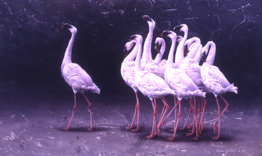 The Performers – Lesser Flamingos in Breeding March by Andrew Denman