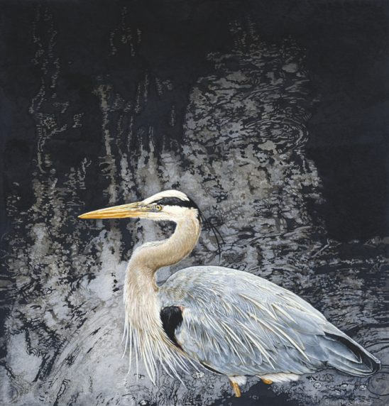 Great Blue Heron by Sueellen Ross
