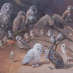Owls of the USA and Canada by Carel Pieter Brest van Kempen (key available)